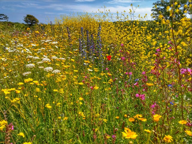 <p>Existing protections 'aren't enough' to make up for steep declines in wildlife across the UK</p>