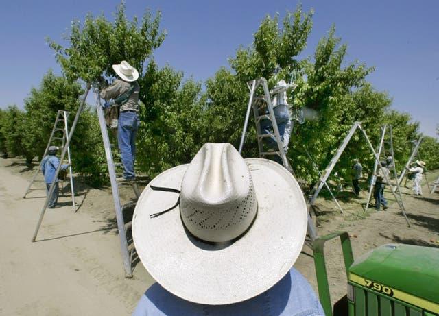 <p>California Pesticide Lawsuits</p>