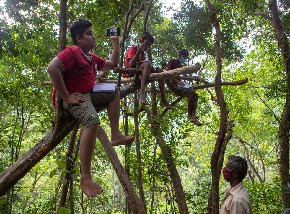<p>Sri Lankan children sit on tree branches as they access their online lessons from a forest reserve</p>