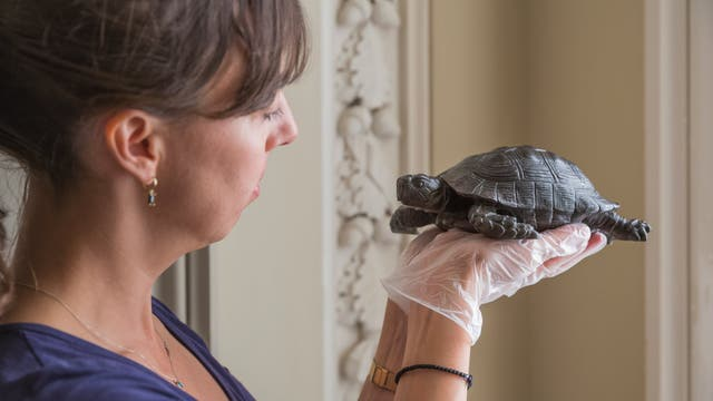 <p>Property curator Elena Greer with one of the tortoises </p>