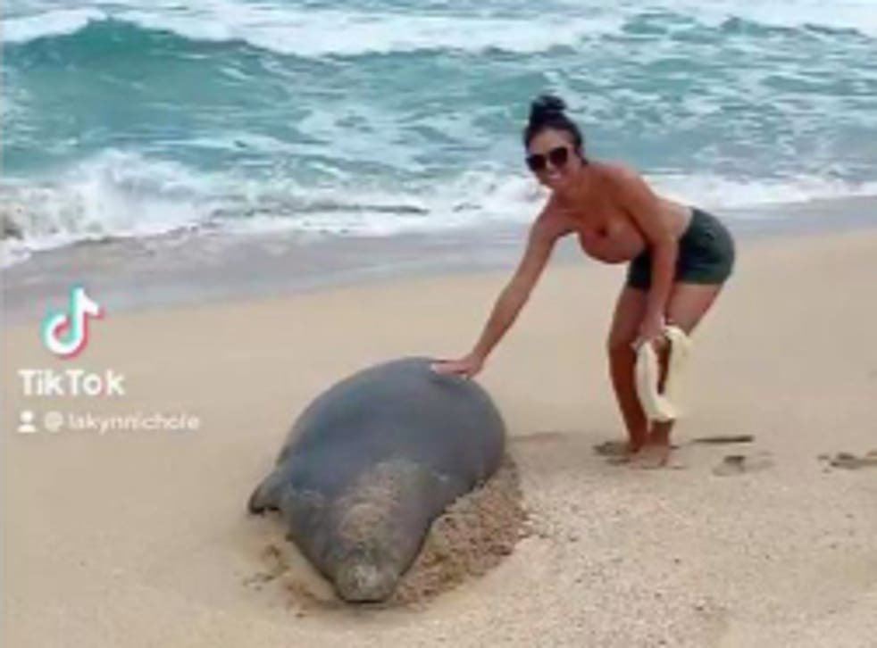 <p>There are roughly 1,400Hawaiian monk sealsleft in existence, a woman has been fined after touching one in Kauai</p>