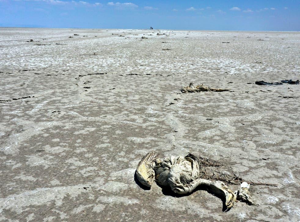 <p>Chicks were found buried by mud</p>