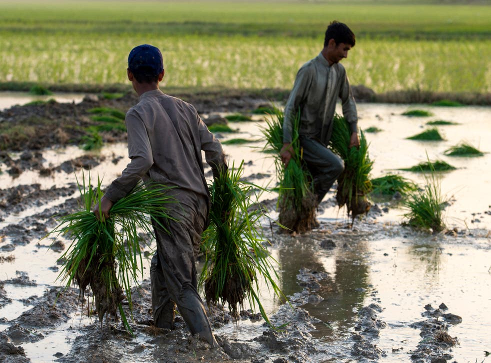 <p>The step could involve lowering tariffs on products such as rice from Pakistan and trainers from Nigeria</p>