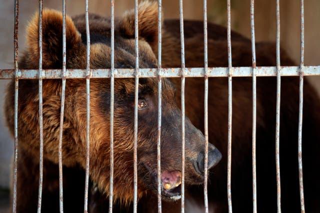 Lebanon Bears