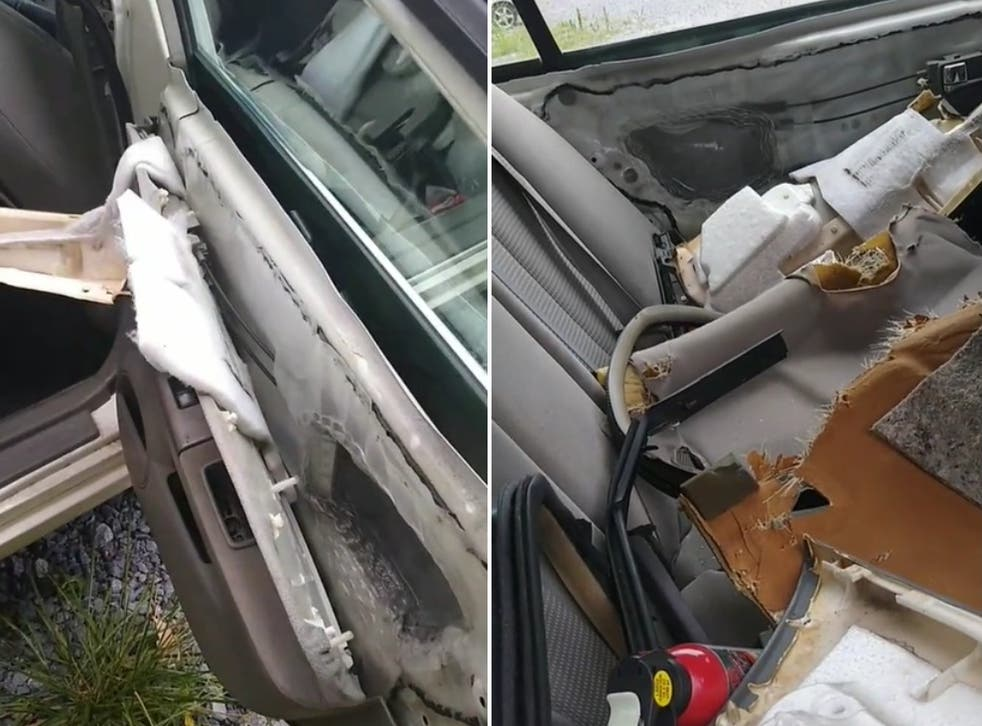 Group of friends scare away black bear that broke into parked car in viral TikTok   indy100