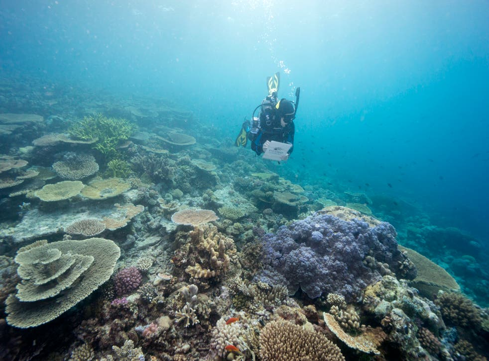 <p>In this file photo, a diver  monitors the health of the Great Barrier Reef off the Australian coast</p>