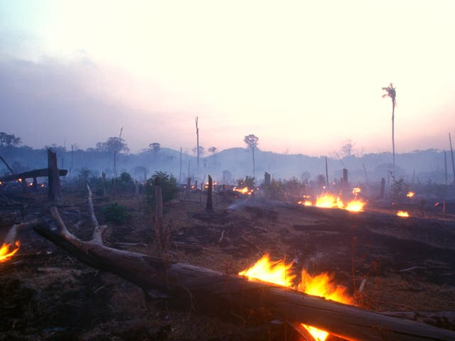 <p>There has been a spike in deforestation since 2020, due in large part to the destruction of the Amazon rainforest </p>