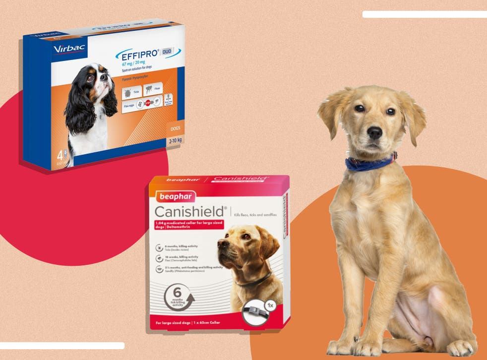 <p>Whether it's for a puppy or on old pooch, we asked leading veterinary practitioners to share their advice </p>