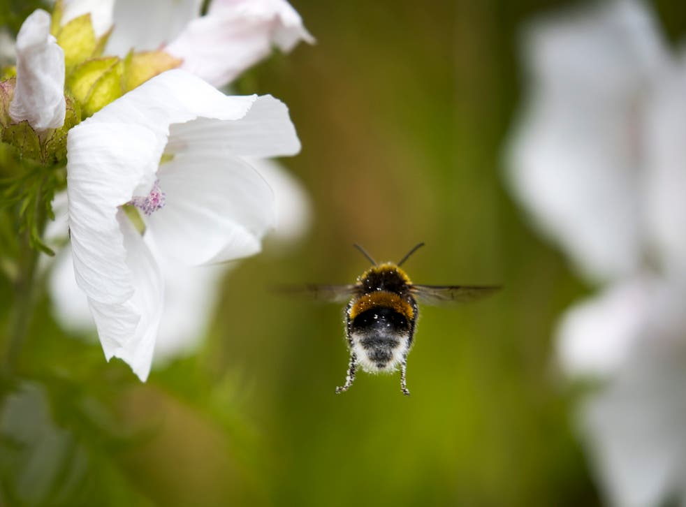 <p>The results could have a big impact on agriculture but need to be tested in a real life environment </p>