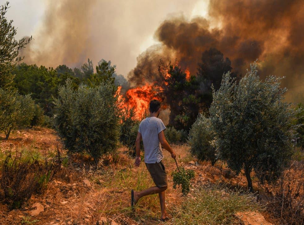 <p>Turkey Wildfire</p>