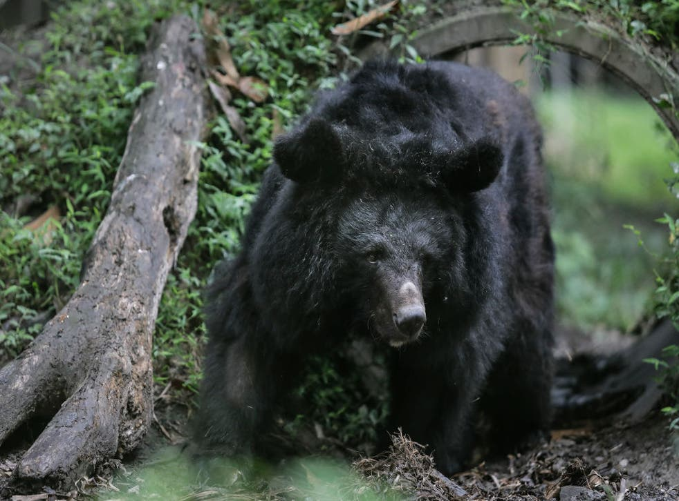 <p>File: A black bear entered a Colorado home, forcing family members inside to lock themselves upstairs for about 45 minutes </p>