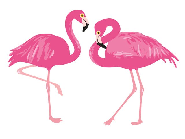 <p>The 'flamingo' is one of Instagram's most popular poses</p>