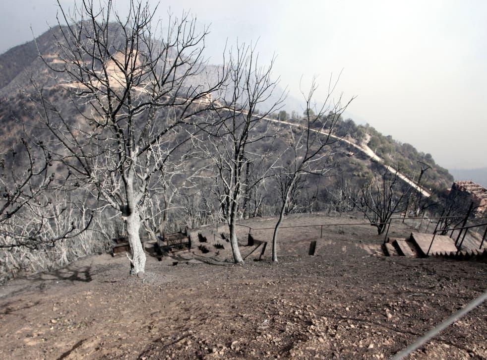 Algeria Fires