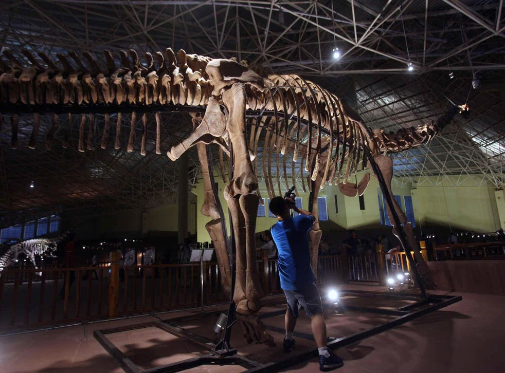 <p>A man clicks photos of a complete articulated skeleton of a Sauropod dinosaur at a museum in Kunming, in southwest China's Yunnan province </p>