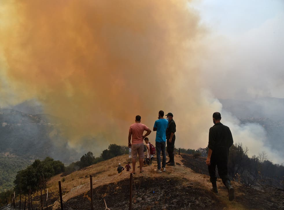 <p>Wildfires have ravaged the Kabyle of Algeria </p>