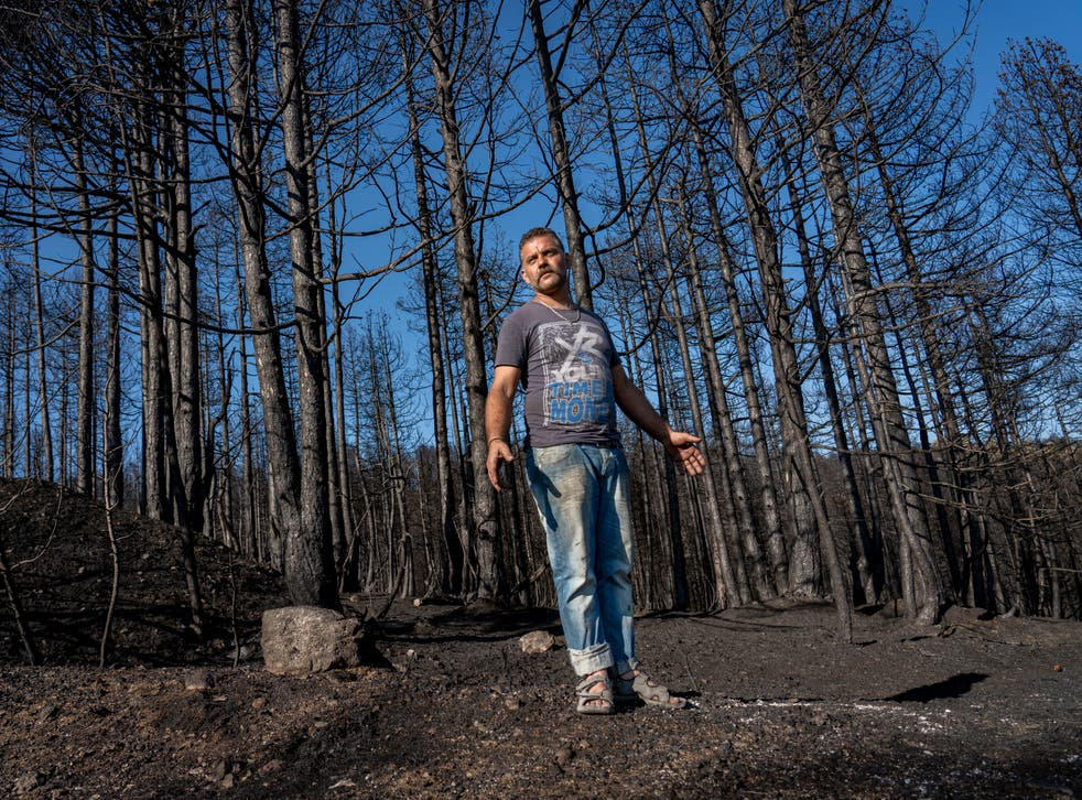 <p>Giorgios stands by the charred remains of his pine trees on Evia island, Greece</p>