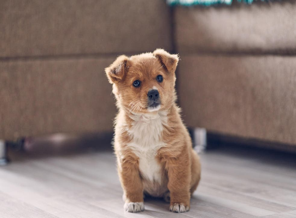 Beware fake pet adverts (Alamy/PA)