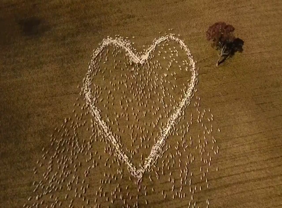 <p>Still from the drone video of tribute by Ben Jackson to his aunt </p>