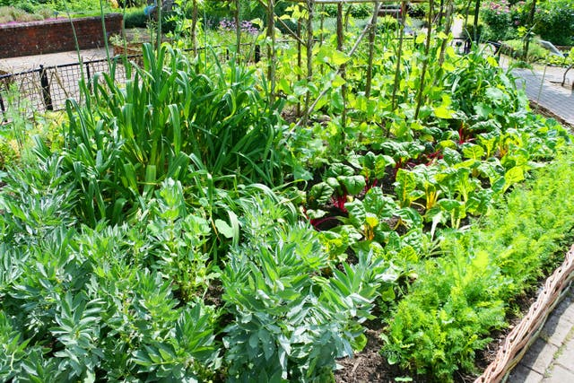 A potager garden full of organic vegetables (Alamy/PA)
