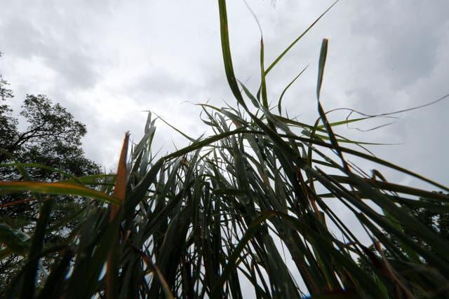 Hurricane Ida Wetlands Explainer