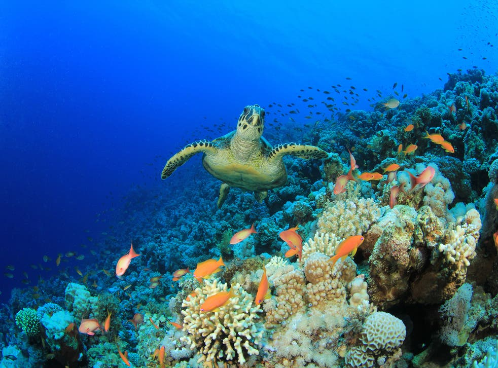 <p>Turtles can be a keystone species in an ecosystem</p>