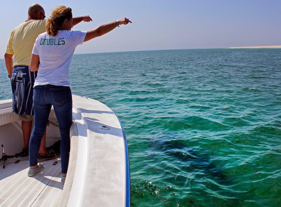 Shark Tourism
