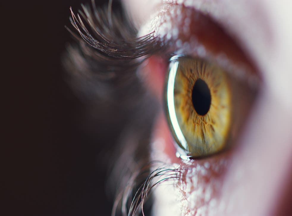 <p>How do our eyes adapt to light and dark?</p>
