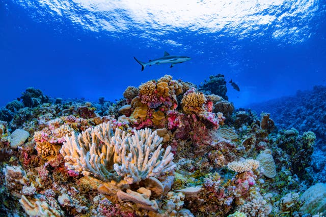 Coral Mapping-Global Atlas
