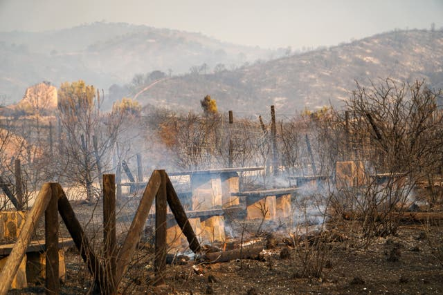 <p>A recreation area devastated by a fire in Estepona</p>