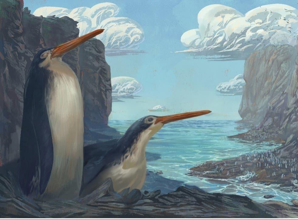 <p>An artist's impression of the Kawhia giant penguin </p>