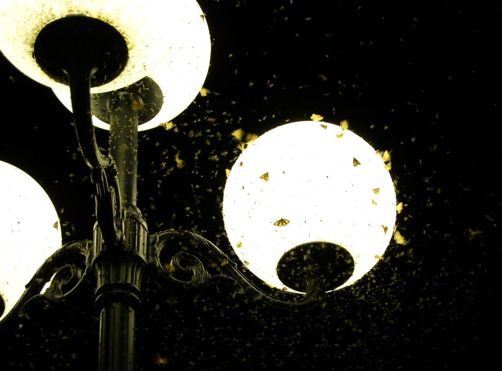 <p>Artificial lighting has been blamed for Europe's 'insect apocalypse'</p>
