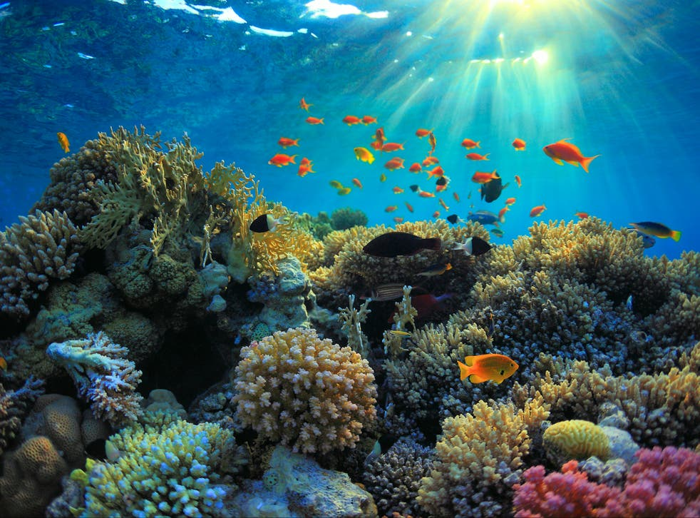 <p>Coral reefs cover only one per cent of the earth's surface but are critical ecosystems for biodiversity</p>