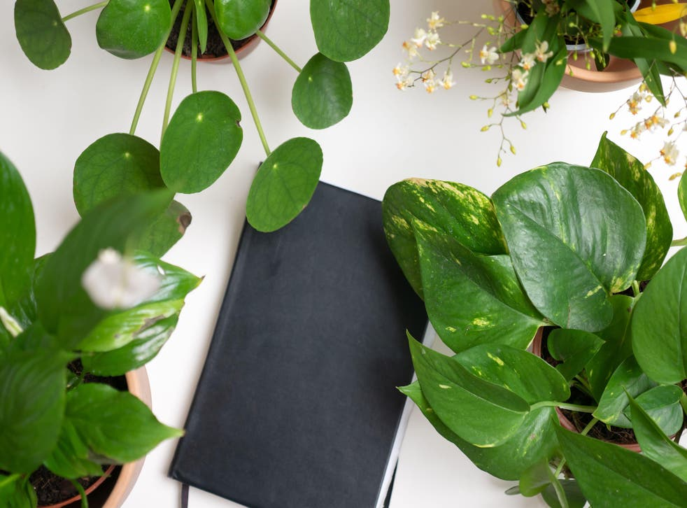 These plants are ideal for desks (Alamy/PA)