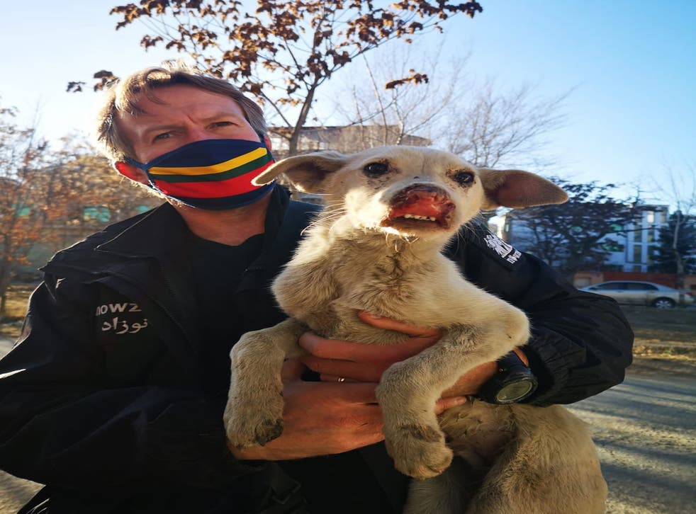 <p>Pen Farthing, founder of animal rescue charity Nowzad. </p>