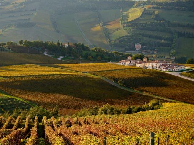 <p>Stunning sun-kissed Borgo Conde Wine Resort</p>