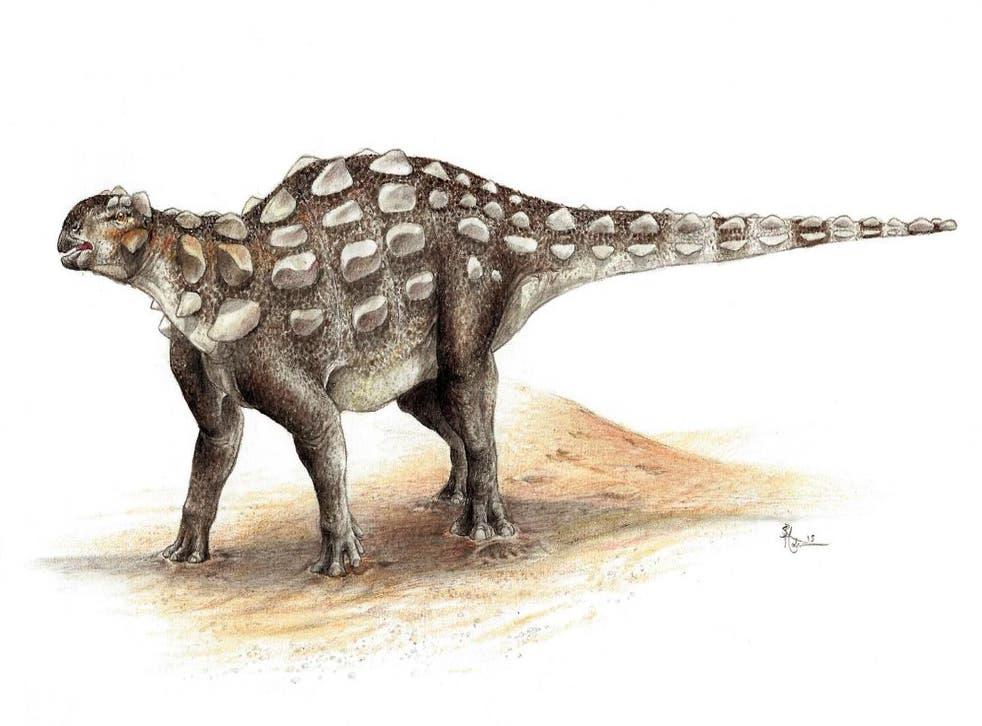 <p>Illustration showing Gobisaurus, an ankylosaur with a stiff tail</p>