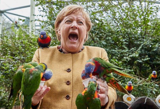 La canciller alemana, Angela Merkel, alimenta a los loritos australianos en Marlow Bird Park en Marlow, Alemania