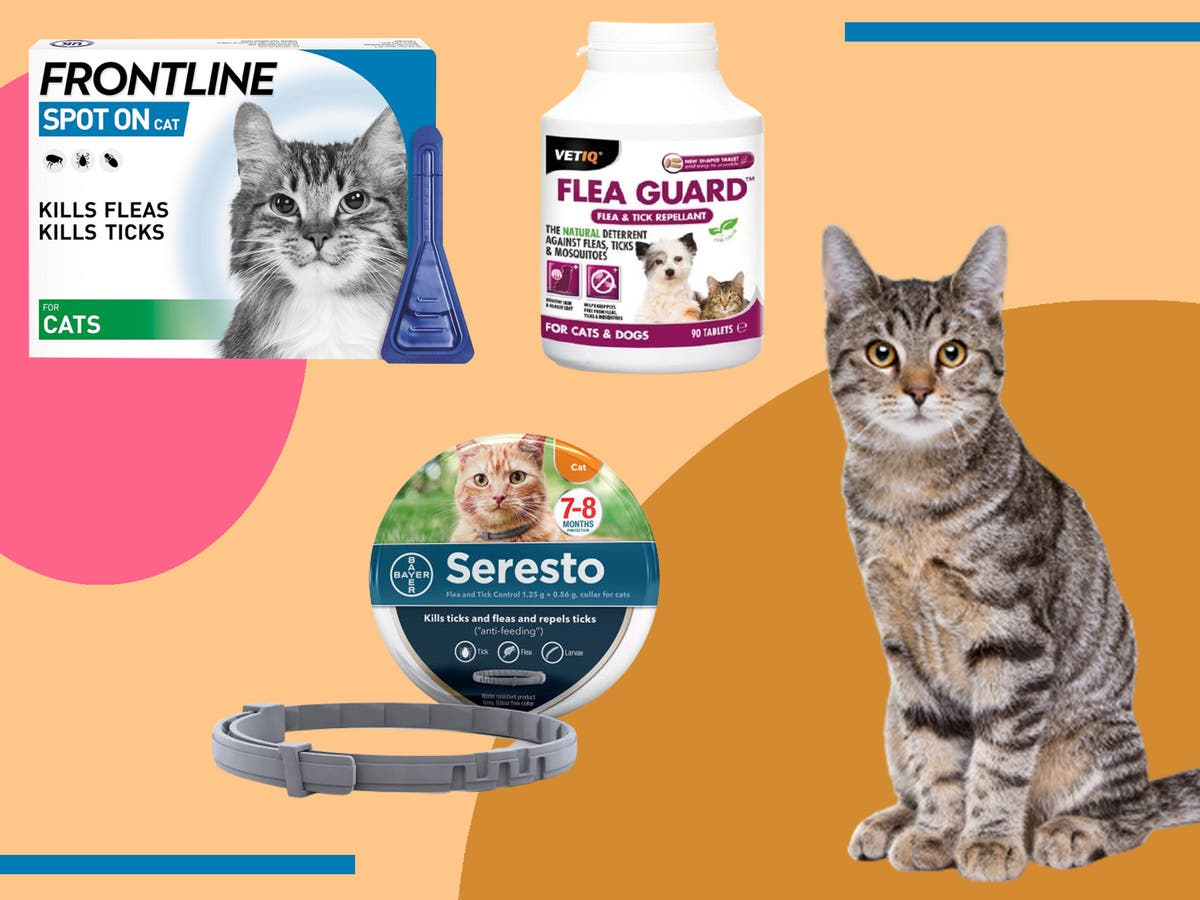 Best flea treatment for cats 2021: Vet-approved collars, spot-on and oral solutions