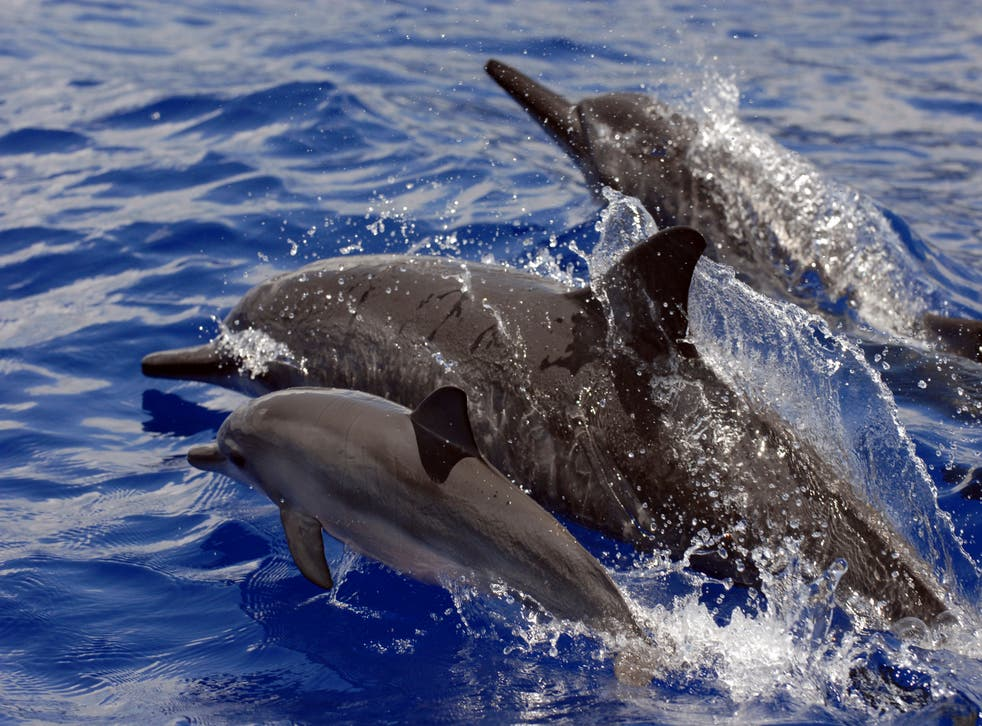 Protecting Spinner Dolphins
