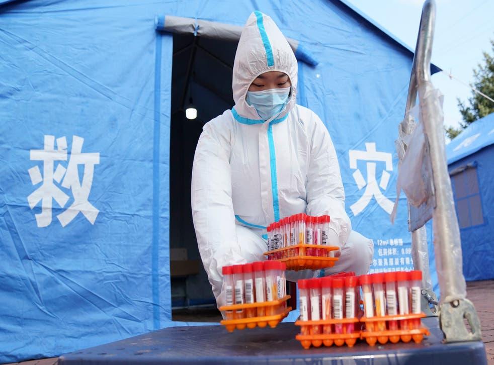 Virus Outbreak China Cats