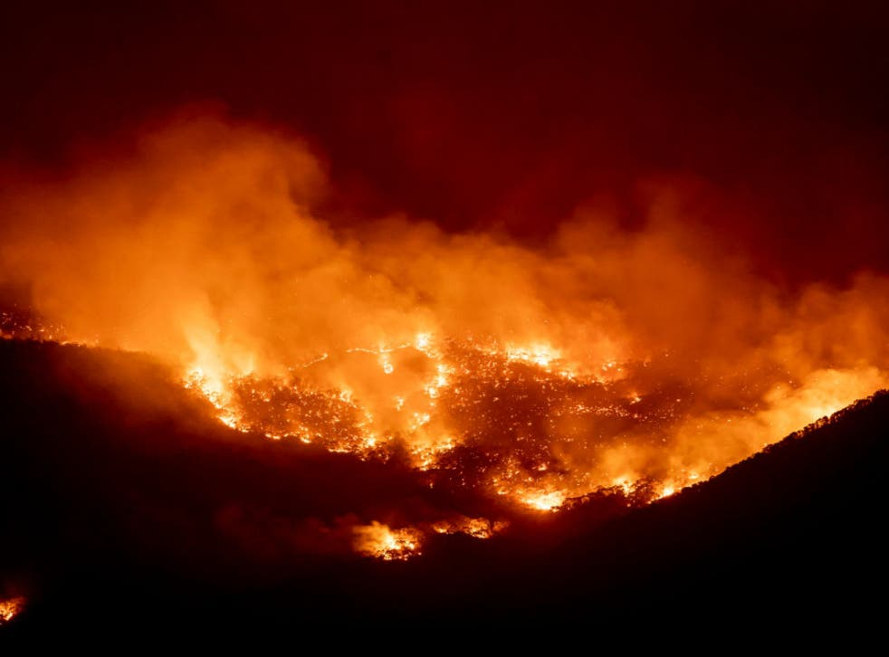 <p>Fire burns within sight of the  suburban fringe of the city of Canberra on January 31, 2020</p>