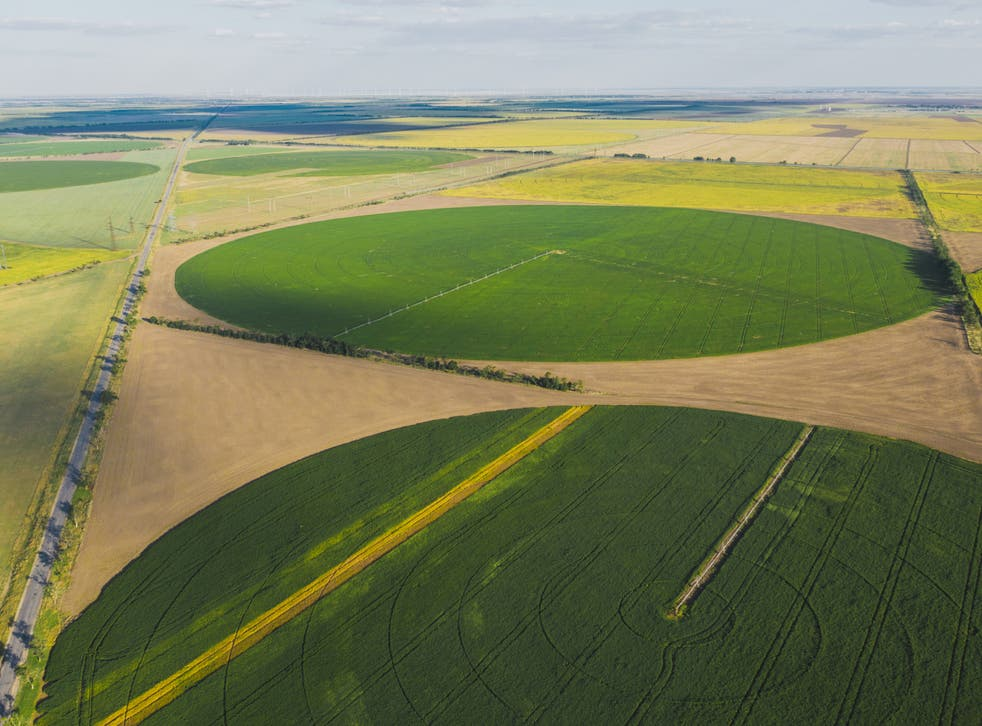 <p>Circular fields on farms in Ukraine. 'Patchworks of nature' alongside high-yield farming areas will help biodiversity flourish, researchers say</p>