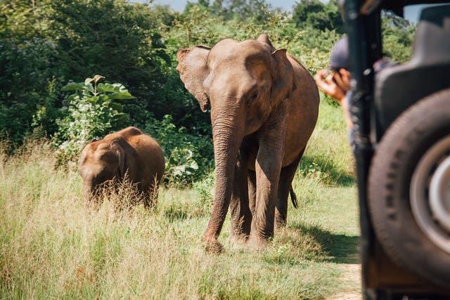 <p> Sri Lanka's Udawalawe national park is less visited than more crowded Yala</p>