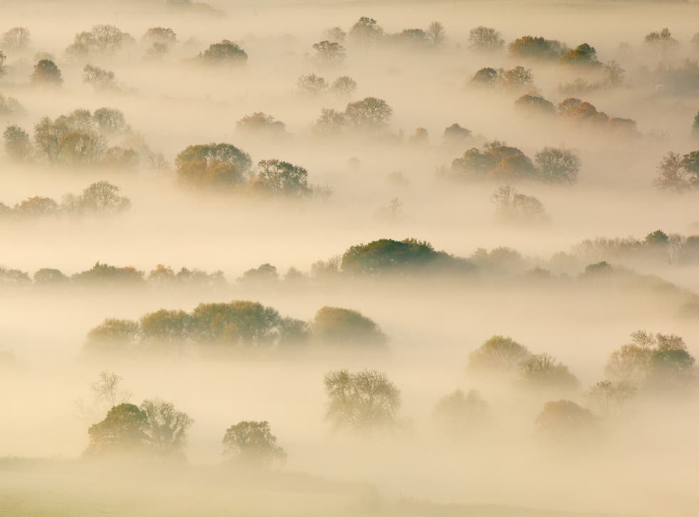 <p>Trees shrouded by mist on the Somerset Levels</p>