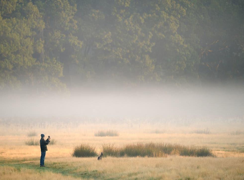 <p>Mist in Richmond Park, London on September 16, 2021</p>