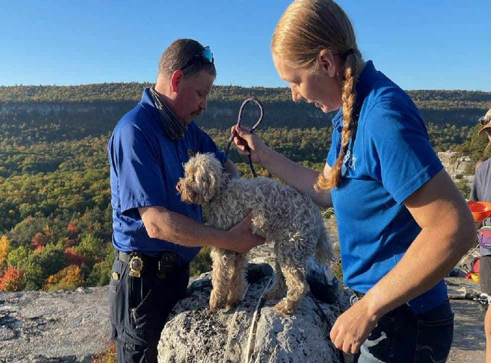 <p>In this photo provided by New York State Parks on Wednesday, Oct. 13, 2021, Ulster County SPCA Executive Director Gina Carbonari, right, and SPCA Supervisor Chris West, left, check a rescued a 12-year-old dog named Liza, found trapped after five days deep inside the narrow, rocky crevice at Minnewaska State Park Preserve in Kerhonkson, N.Y. </p>