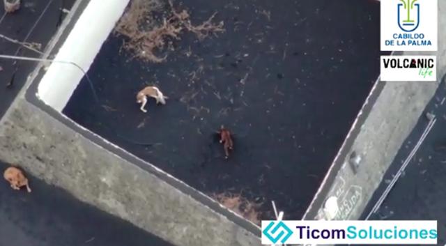 Tres perros varados en un patio abandonado en la isla canaria española de La Palma