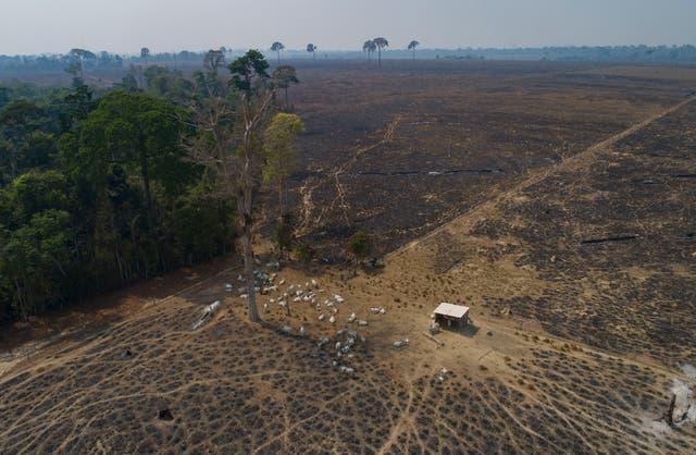 CLIMA-BRASIL-DEFORESTACIÓN