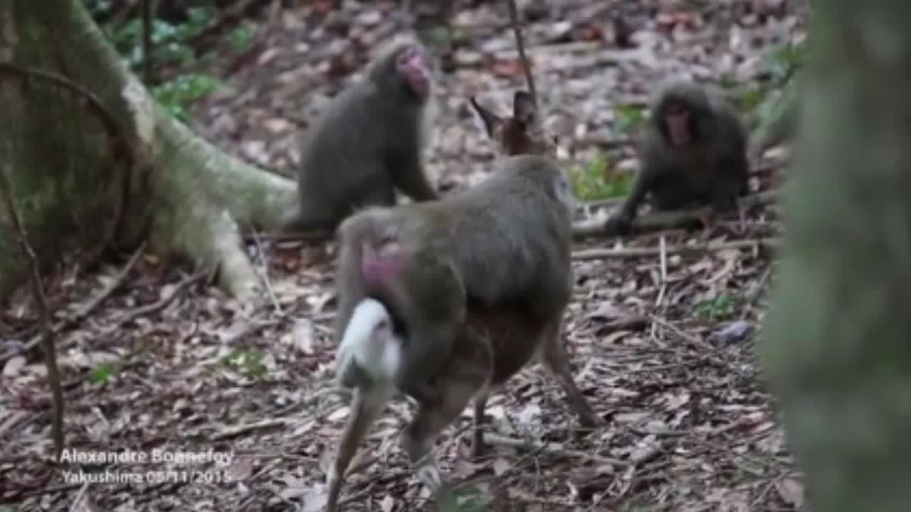 Two animals from totally different species found having sex by scientists
