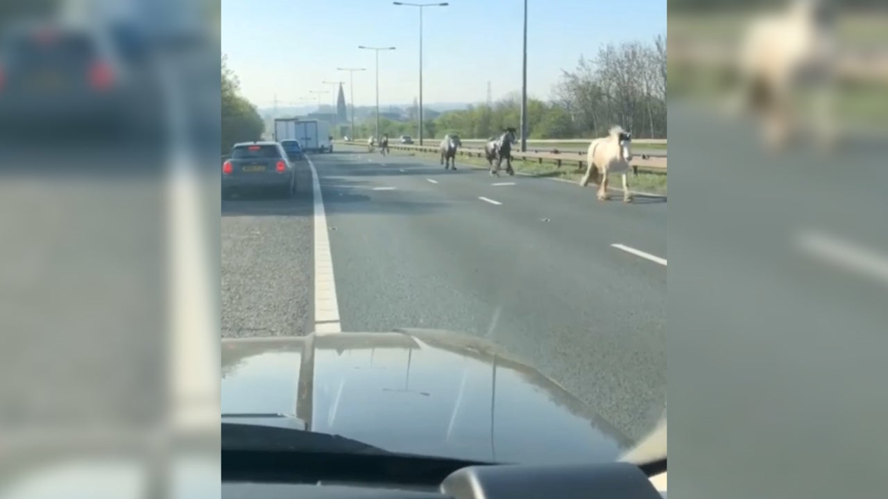Horses spotted galloping wrong way along motorway: 'They were totally oblivious to the danger'